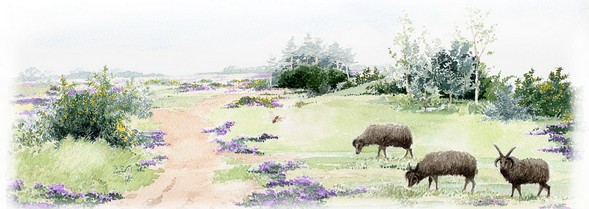 The History of our Heathland