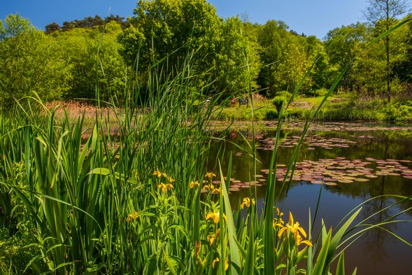 Learn about Kelling's Conservation Pond