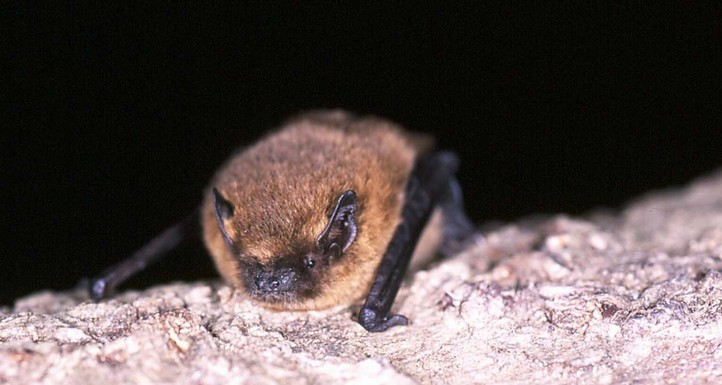 Our bat population at Kelling Heath